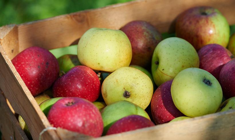 Apfel ist nicht gleich Apfel